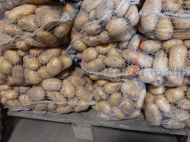 Ziemniaki Ignacy,beleroza,winieta,lord w woreczkach po 15kg.