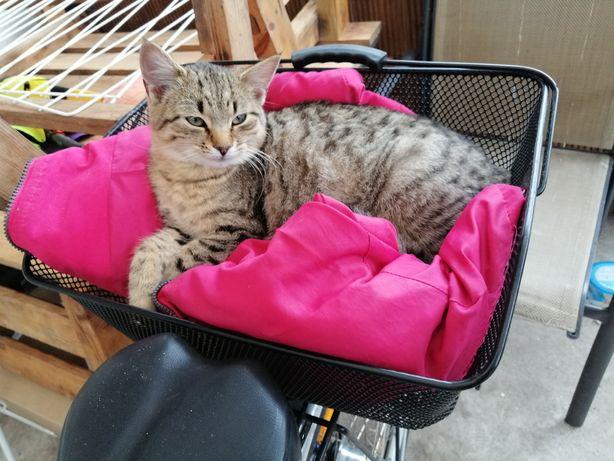 Oddam kociczki ma 7 miesięcy