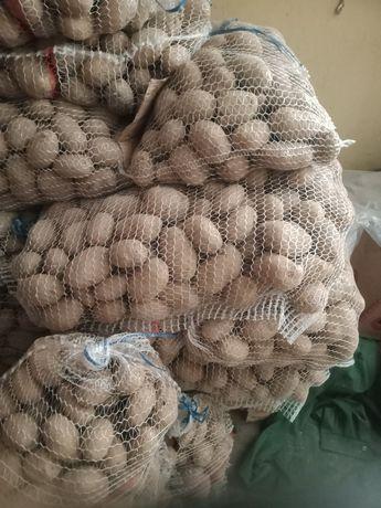 Ziemniak jadalny i sadzeniaki