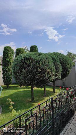 Обрезка сада, формирование деревьев, Обработка от вредителей