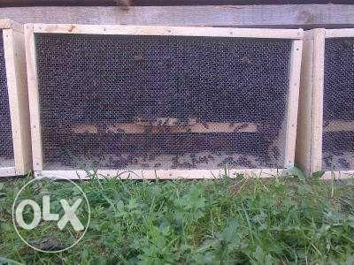 Безсотові бджолопакети карпатка поштою