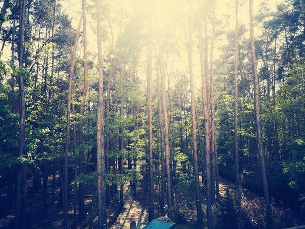 Chillout Dom wynajem w lesie 40min od Łodzi i od Warszawy joga, sauna