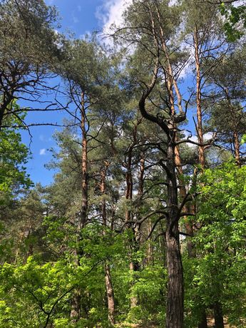 Wilga Atrakcyjna działka w lesie na dom całoroczny lub letniskowy