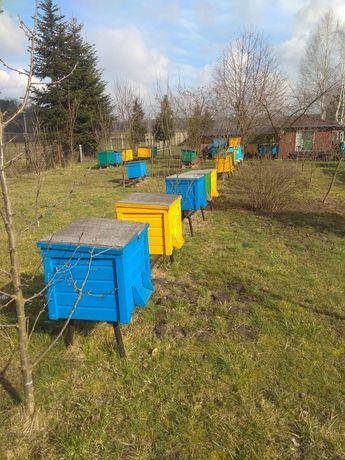 Ul wielkopolski na 20ramek ul dadant ule wielkopolskie pszczoły