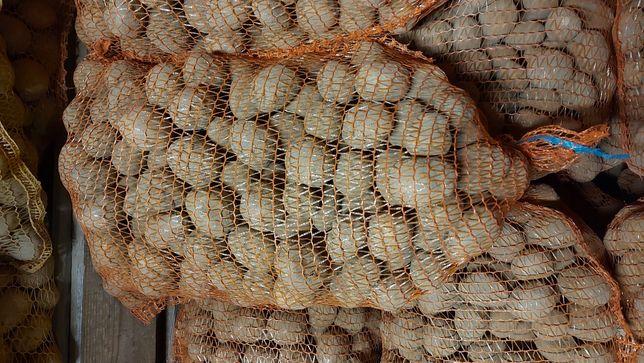 Ziemniaki wineta rozmiar sadzenia -5
