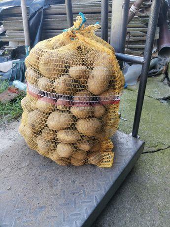 Ziemniaki odmiana lord dowóz gratis