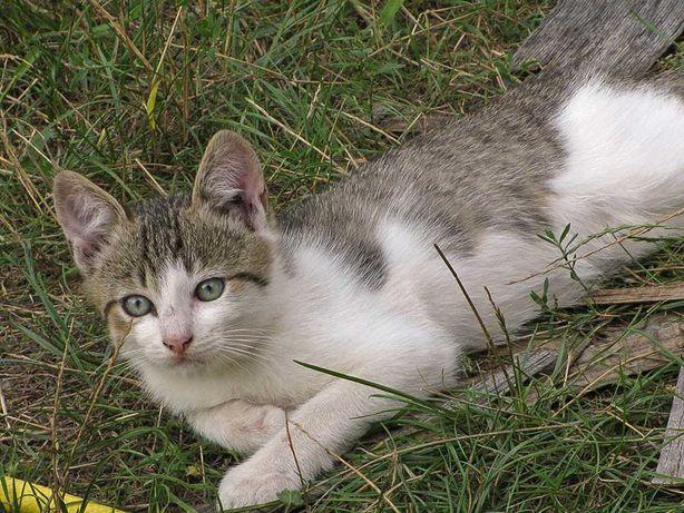 Котята (полосато-белый мальчик и бело-рыжая девочка)