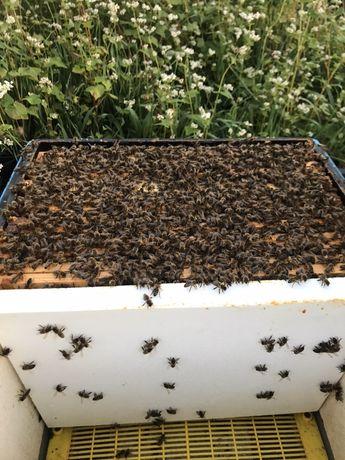 Odklady pszczele 5 ramkowe