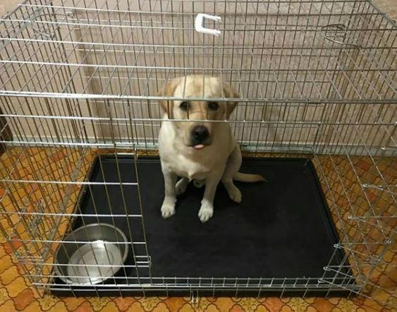 Вольер переноска, манеж, клетка для собак, кошек, птиц. Разные размеры