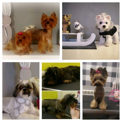 Salon pielęgnacji zwierząt PUPIL