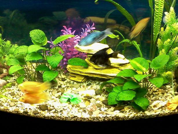 Аквариумные рыбки. Оформление и запуск пресноводных аквариумов.