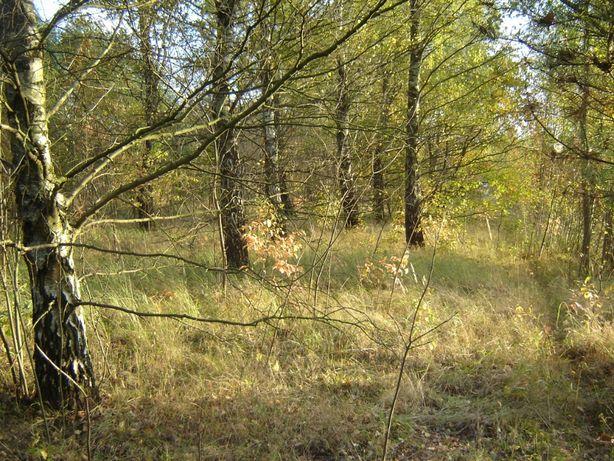 Beskidzka/Brzezińska-idealne miejsce na dom, firmę, działkę, las
