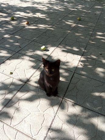 Віддам котиків в турботливі руки