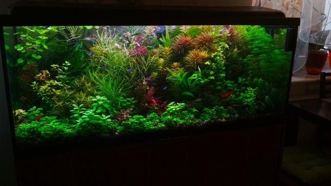 Zestaw Roślin do Akwarium duży