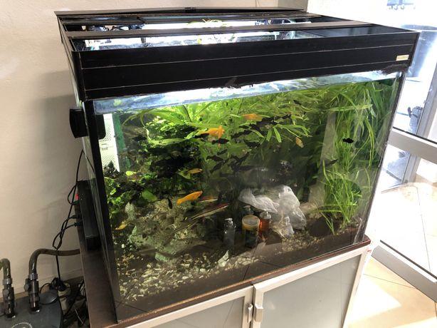 Aqua Boro Akwarium 280 litrów z szafka 80x60x60