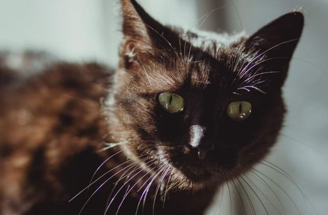 Cudowna kotka Ziutka szuka domu