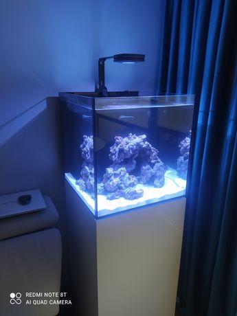 Nowoczesne akwarium morskie