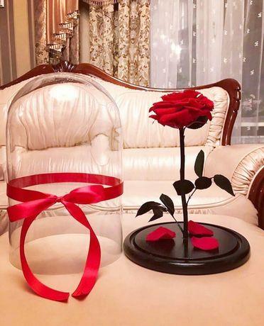 Роза в Колбе +(Коробка,Гравировка,Лепестки,Сертификат/Гарантия).