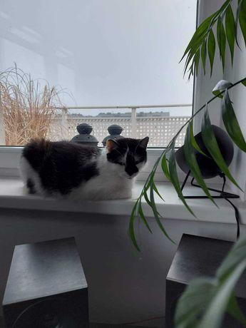 Młoda Kotka Milusia