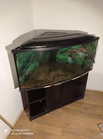 Akwarium narożne z szafką  240l + filtr wewnętrzny