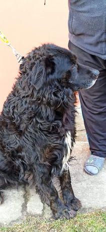 Alex śliczny pies do pilnej adopcji Iwona Tom.