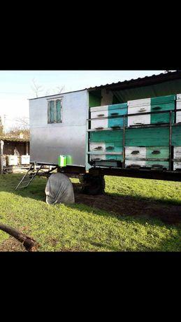Павильон для пчел на 24 семьи
