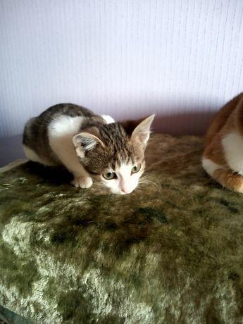 Кошечка в добрые руки, котёнок, кошка, кот, котята