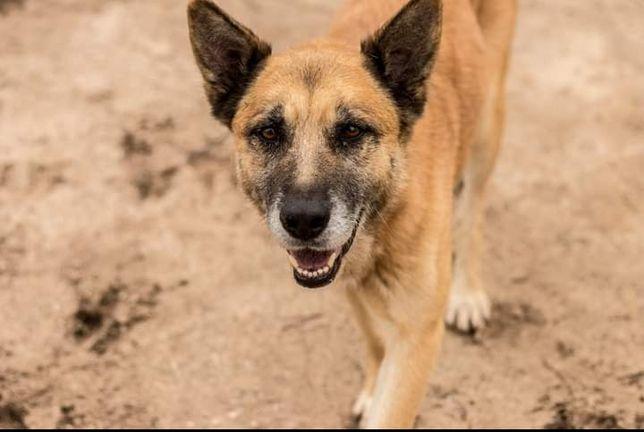 Anjo- Cachorro de porte médio para adoção