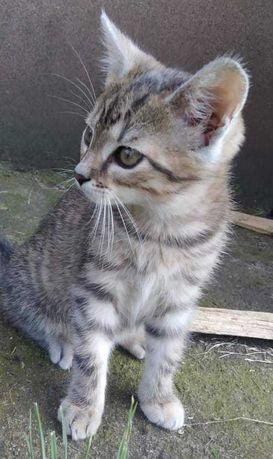 Oddam Śliczną Kotkę