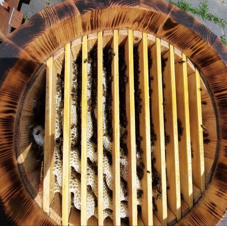 Пчелы, пчелопакеты, сеьи пчел, пчелосемьи с уликами