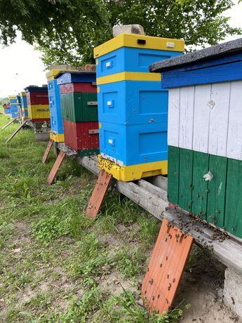 Ule z pszczołami / łagodne  rodziny pszczele / ul pszczoły