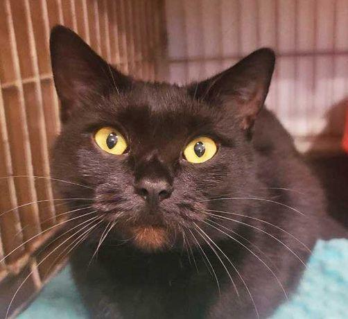 Чорна кішечка Муся 10 міс шукає сім'ю! кішка кіт кошка кот