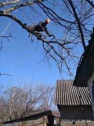 Зрізаємо дерева будь якої складності