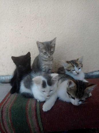 Котятки бесплатно!