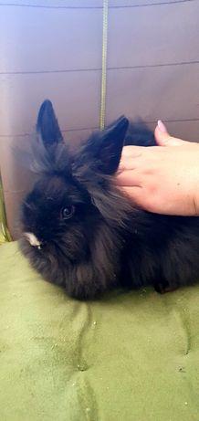 Кролик безплатно