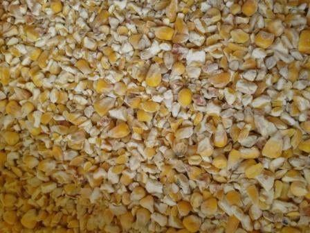 Бита кукурудза, після сушки