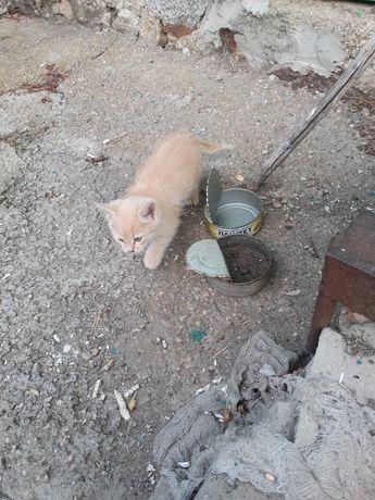 Найден котенок на улице СШ № 30