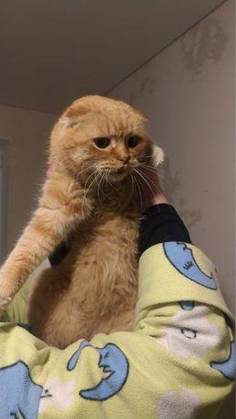 Найден вислоухий кот!