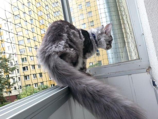 Siatka dla kota i na gołębie. Balkon, taras, okno.