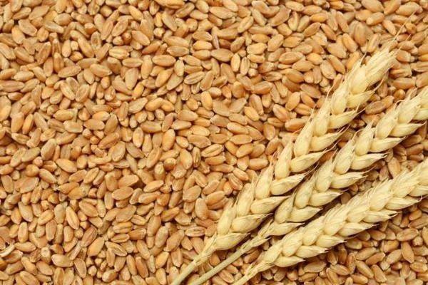 Продам Пшеницу!!