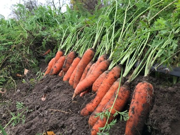 Ekologiczna kasza jaglana, gryczana, ziemniaki, marchew...