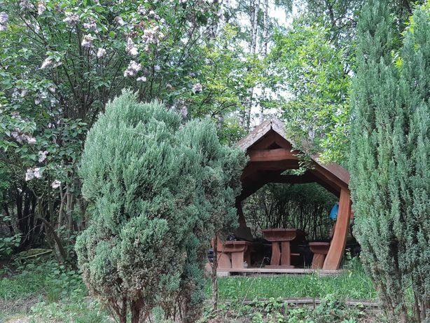 """Ogródek działkowy ROD """"Pod Brzozą"""" w okolicy Kopca Kościuszki, Kraków"""