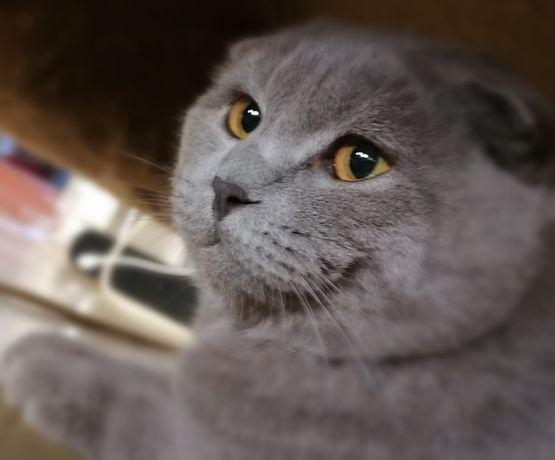 Предлагаем Вам вязку с нашим котиком