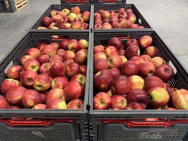 Высококачественные яблоки украинского производства