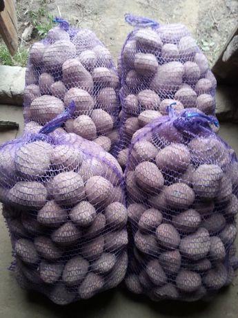 Ziemniaki jadalne Vineta Irga Bellarosa