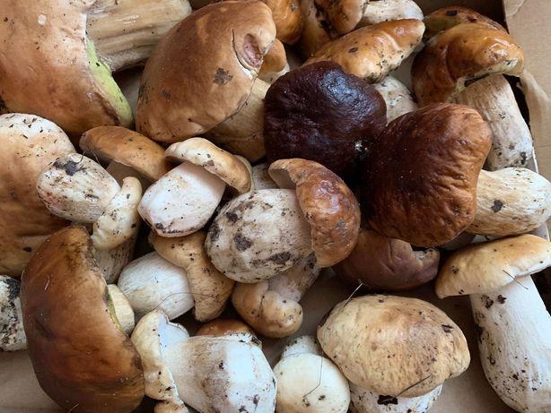 Sprzedam grzyby, gąski zielone, koźlarze, podgrzybki, maślaki borowiki