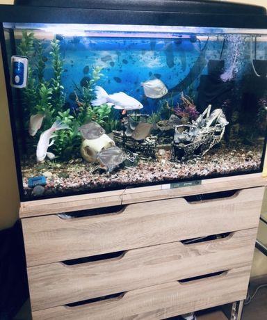 Аквариум 120 литров с рыбками, фмльтром, лампами и декором.