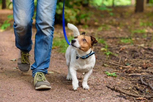 Выгуляю вашу собаку
