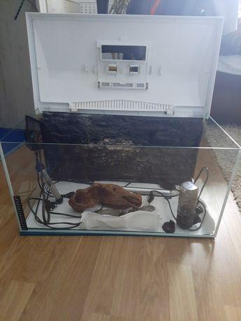 Akwarium Aquael 60x30x30 zestaw startowy