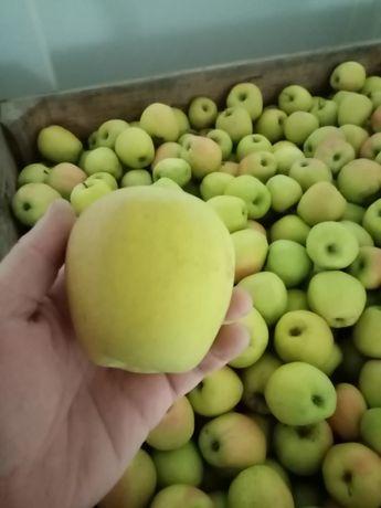 Jabłko Golden z KA po Smartfreshu